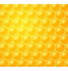 Honey making in honeycombs vector