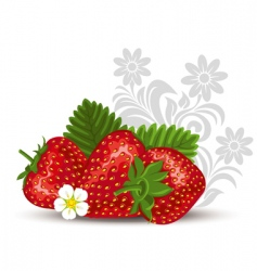Strawberry with flowers and leaves vector