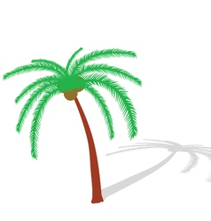 Palm tree on white vector
