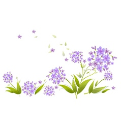 Spray blue agapanthus vector