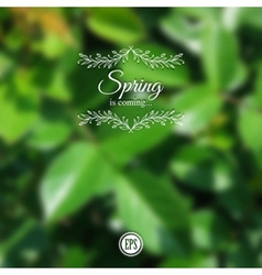 Blurred spring background with branch and green vector