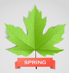 Maple leave with spring banner vector
