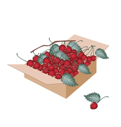 Sweet red cherries in a shipping box vector