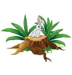 A bunny above a trunk vector