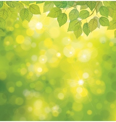 Spring leaves background vector