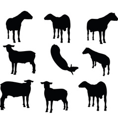 Sheep silhouette with looking pose vector