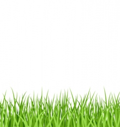 Grass pattern vector