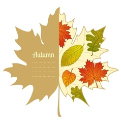 Autumnal maple leaf background vector