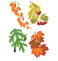 Branch of autumn trees vector