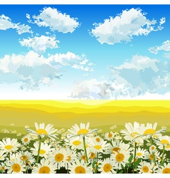 Endless yellow field with daisies vector