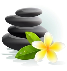 Plumeria flower and spa stones vector
