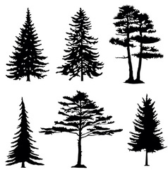 Coniferous trees silhouettes collection vector