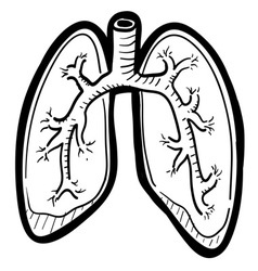 Human lungs doddle vector