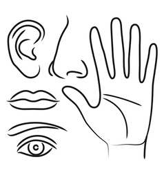 Sensory organs hand nose ear mouth and eye vector