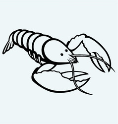 Crayfish sketch vector