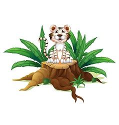 A tiger above a trunk vector