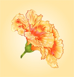 Tropical flowers yellow hibiscus tropical flowers vector