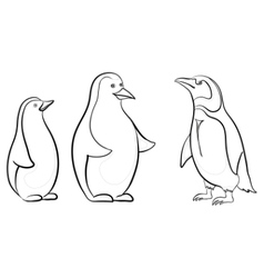 Emperor penguins contours vector