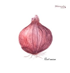 Red onion vector