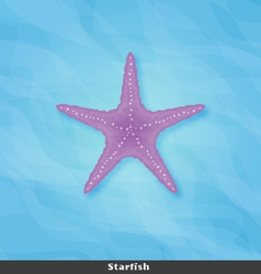 Strafish copy vector