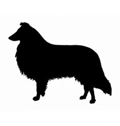 Longhaired collie vector