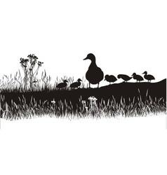 Meadow to ducks vector
