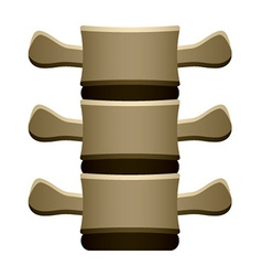 Human spine vertebrae front view vector