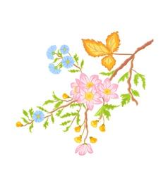 Twig shrub whit spring flowers vector