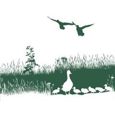 Wild duck spring vector