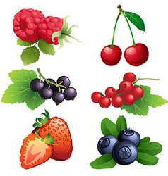 Ripe strawberry raspberry cherry blackberry black vector