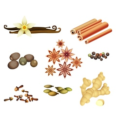 Collection of spices vector