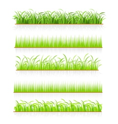 Green grass vector