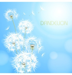 Abstract background with flower dandelion vector