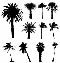 Collection of palm trees silhouettes vector
