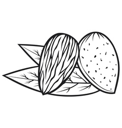 Almond with leaves - almond nut vector