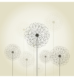 Flower a dandelion vector