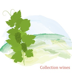 Grapevine and grapes clusters vector