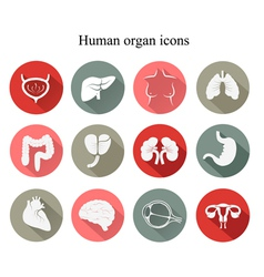 Set of human organs flat icons vector