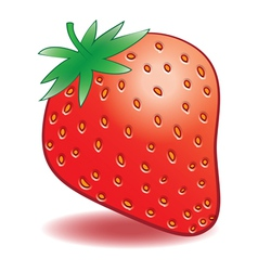 Ripe strawberries on a white background vector