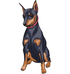 Miniature pinscher dog vector