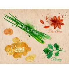 Spices herbs watercolor star anise parsley spring vector