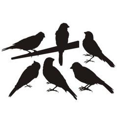 Canary bird silhouettes vector