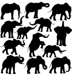 African elephants vector