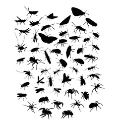 Collection of silhouettes of insects and spiders vector