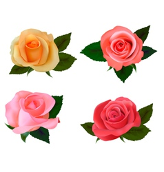 Group of a beauty roses vector