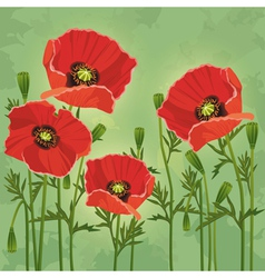 Floral vintage background with flowers poppies vector