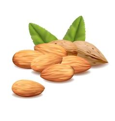 Almonds vector
