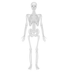 Skeletal system vector