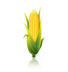 Object corn vector