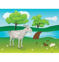 Goat and green lawn vector